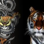 Coba-Cara-Main-Dragon-Tiger-Online-Dengan-Sistem-Sederhana